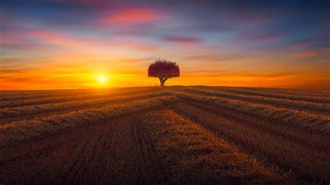 wallpaper field sunset landscape  nature