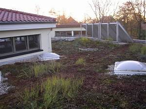 Extensive Dachbegrünung Pflanzen : dachbegr nung mit dem gr ndach einen wichtigen beitrag f r die umwelt leisten ~ Frokenaadalensverden.com Haus und Dekorationen