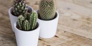 Comment Entretenir Un Cactus : comment prendre soin d 39 un mini cactus le paysagiste le ~ Nature-et-papiers.com Idées de Décoration