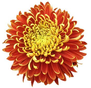 wholesale flowers  year  floral trends diy