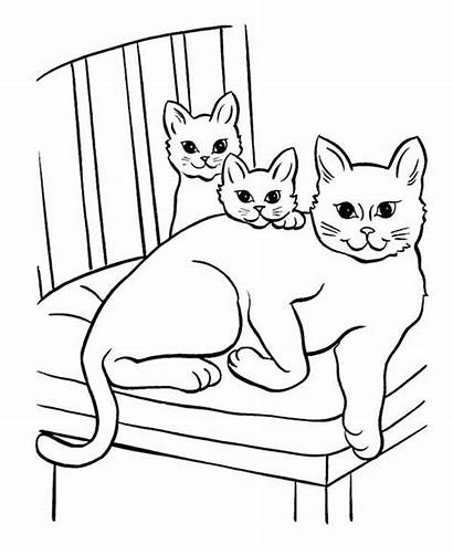 Coloring Cat Pages Kitten Cartoon Printable Pet