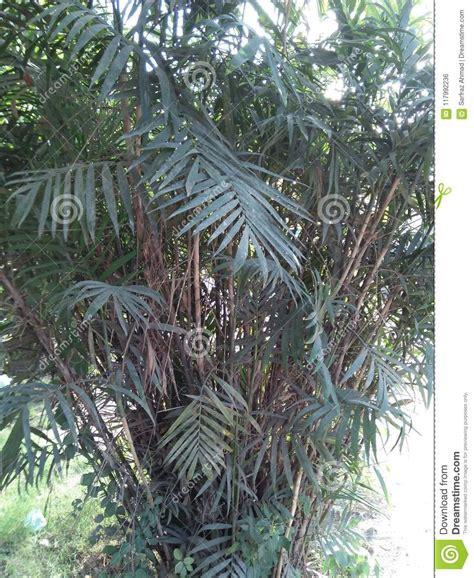 bambous masse compacte grouper genre grand est froid