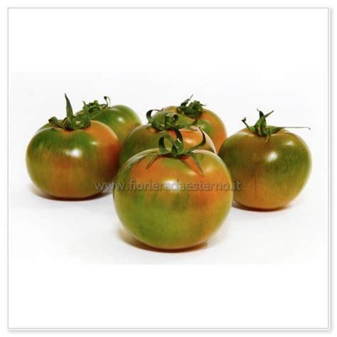 vaso per pomodori pomodori in vaso fioriere da esterno vasi fioriere