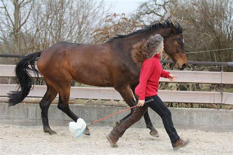 hilfe mein pferd ist zu duenn myhorse