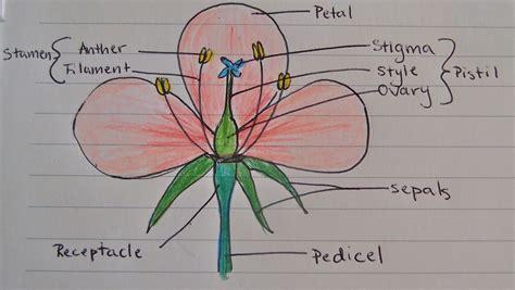 Diagram Of Flower Part by Diagram Experiment No 1