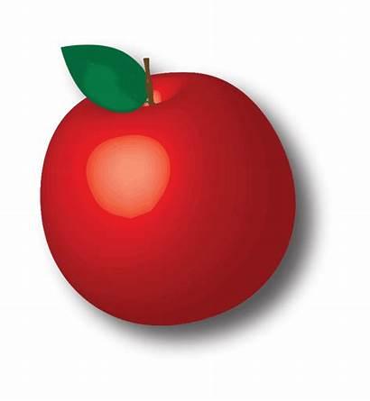 Apples Apple Fruit Tree Bad Debbie Growing