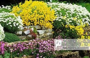 Blumen Für Steingarten : steingarten mit verschiedenen blumen lizenzfreies bild bildagentur f1online 2224066 ~ Markanthonyermac.com Haus und Dekorationen