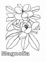 Magnolia Coloring Pages Tree Flower Flowers Template Printable Recommended Sketch Colors Mycoloring sketch template