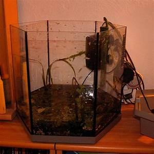 Selbstklebende Folie Richtig Anbringen : 37l sechseck neueinrichtung schwarzes garnelenbecken aquarium forum ~ Orissabook.com Haus und Dekorationen