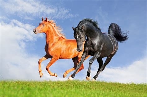 Nature Horse Animals Hd Images