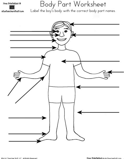 Label Body Parts Worksheet Spanish Homeshealthinfo
