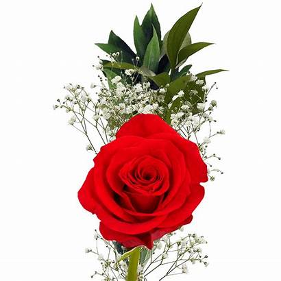 Single Flowers Mother Flower Bouquets Roses Valentine