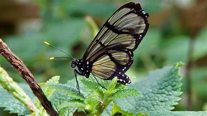 Butterfly Transparent Resolution Pixels 1080 Wallpapers 1920