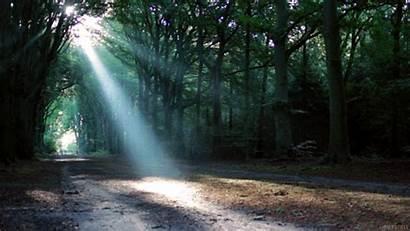 Gifs Living Stills Sun Forest Cinemagraph Photographers