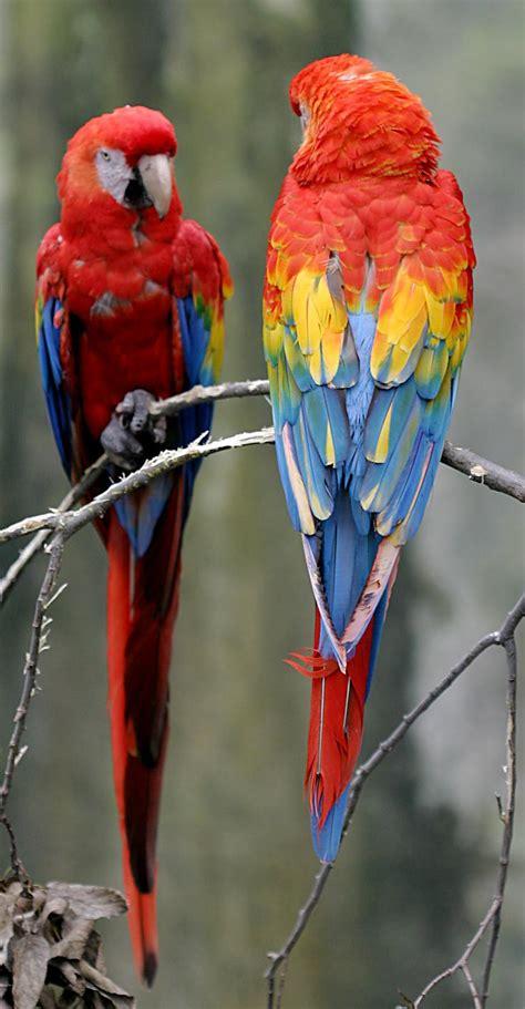 krāšņie putni - Spoki