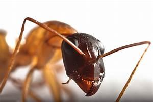 Ameisen Entfernen Garten : ameisen vernichten cheap ameisen bekmpfen u tipps with ~ Lizthompson.info Haus und Dekorationen