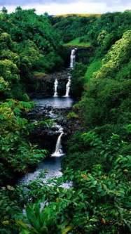 1000+ ideas about Amazon Rainforest on Pinterest | Amazon River ...