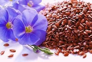Очищение печени с помощью семенами льна