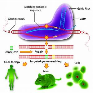 The Age Of Gene Editing  Everything You Need To Know About