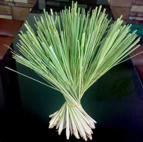 khasiat bahan ramuan wedange mbah darmo mbah darmo wedang uwuh wedang secang wedang sereh