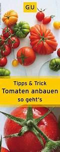 Tomaten Selber Anbauen : tomaten selber anbauen wir verraten euch praktische tipps tricks gu pflanzen in der ~ Orissabook.com Haus und Dekorationen