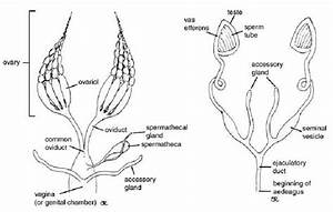 Lab 2 Assignment  Internal Anatomy  U2013 Entomology 311 Lab Manual