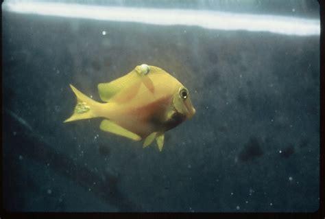 aquarium fish diseases questions  treating sick fish