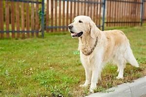 Cloture Chien Jardin : avez vous des conseils pour cl turer un jardin pour un chien cl ture mur et palissade ~ Melissatoandfro.com Idées de Décoration