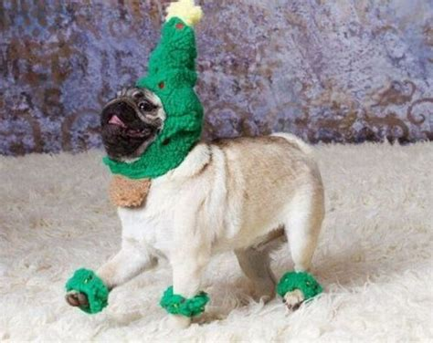pug christmas tree spreading cheer