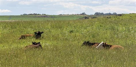 pasture leasing miscommunication  contracts