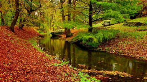 Autumn Landscape River Forest Fallen Leaves Red Hd