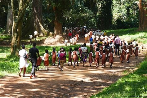 Botanischer Garten Entebbe by Entebbe Botanischer Garten Afrifant Die Erg 228 Nzung Zu