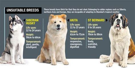 urban india  bringing pets home faster