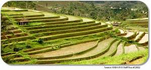 World Rices  Cultivating Rice In Indonesia