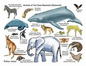 Interesting Facts On Mammals | Wikybrew.com