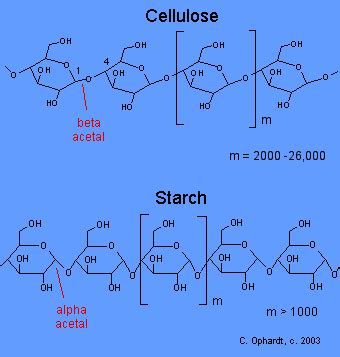 carbohydrates cellulose