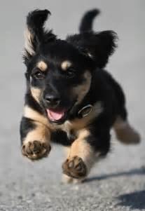 Funny Puppy Running
