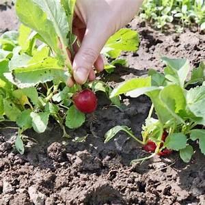 Quoi Planter En Automne : l gumes arbustes quoi planter en juillet ooreka ~ Melissatoandfro.com Idées de Décoration