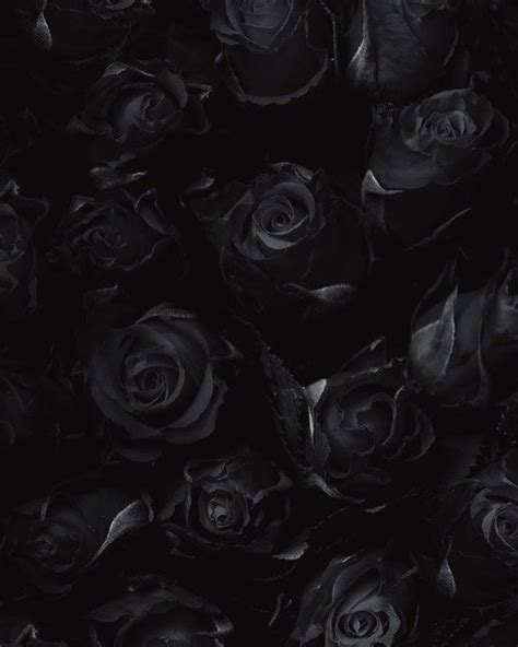 More memes, funny videos and pics on 9gag. Like a dark rose, her beauty was beautifully fatal. 🥀 Tag your soulmate. | Black wallpaper ...
