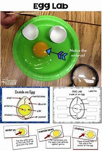 209 Best Images About First Grade Science On Pinterest