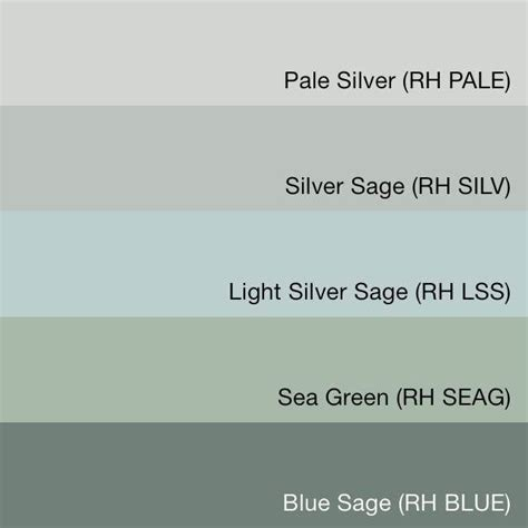 Best 20+ Silver Sage Ideas On Pinterest  Silver Sage