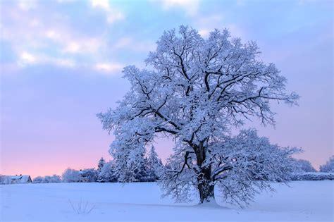 Vai Latvijā beidzot būs īsta ziema? Jau šonedēļ gaidāms ...