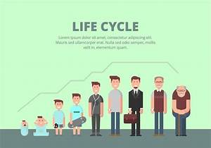 Life Cycle Illustration