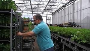Wann Pflanzt Man Hortensien : wann pflanzt man himbeeren youtube ~ Yasmunasinghe.com Haus und Dekorationen