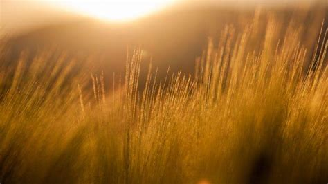 nature filter photography field sun rays barley