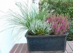 Blumenkästen Bepflanzen Sonnig : winterharte gr ser f r den balkon balkon oasebalkon oase ~ Orissabook.com Haus und Dekorationen