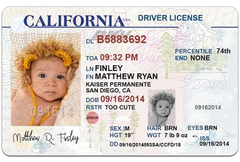 free drivers license template i will send 1 california drivers license photoshop template photoshop chris d elia and templates
