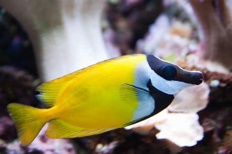 common saltwater aquarium fish diseases superpages