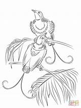 Paradise Bird Coloring Pages King Hollands Quetzal Para Colorear Printable Drawing Birds Dot Colouring Flower Supercoloring Bonanza Getcolorings Print Calendar sketch template