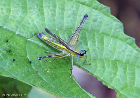 colorful   grasshopper  insect